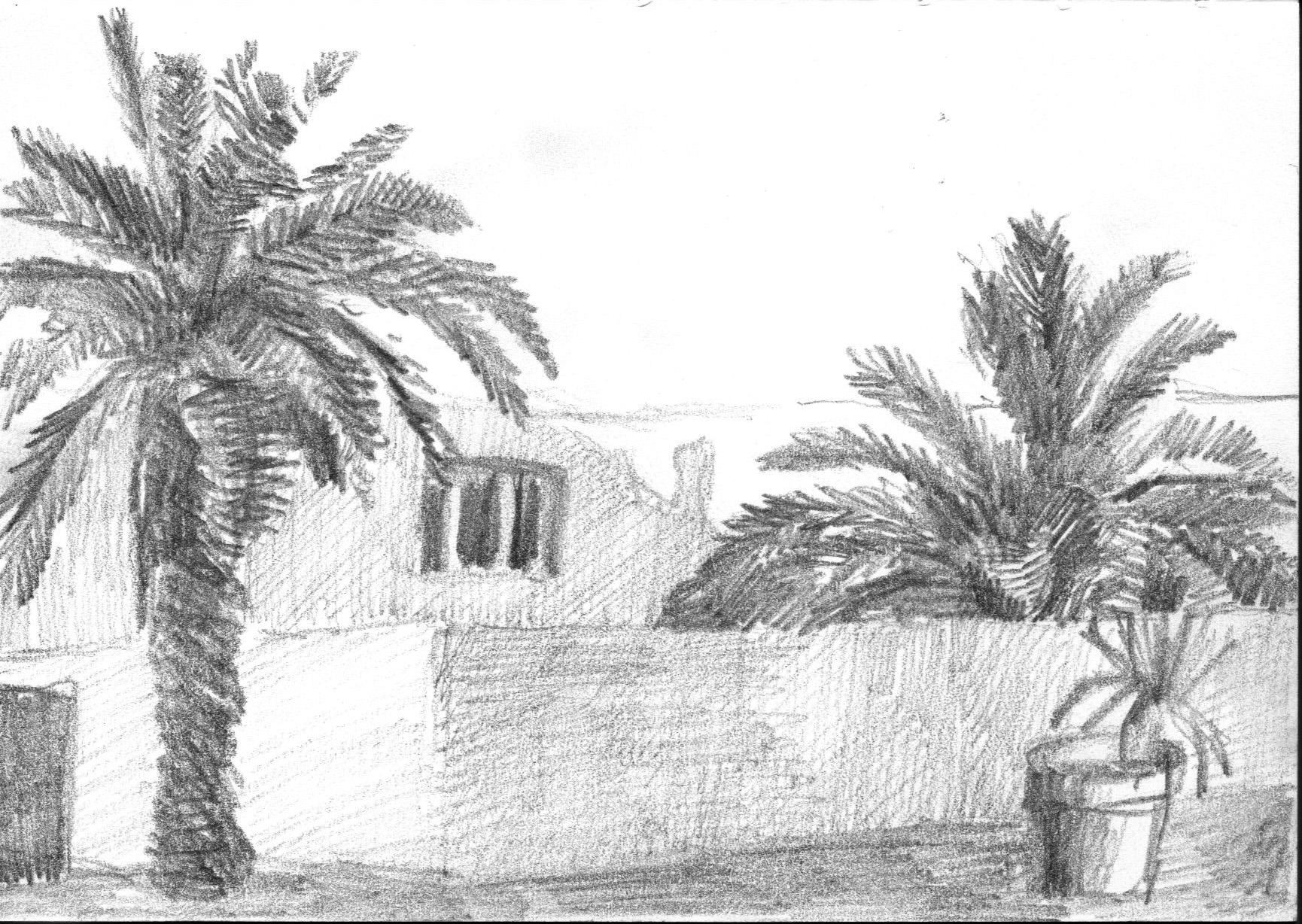 palmeras-alejandra-caballero-lápiz-grafito-casa-paisaje